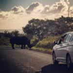 Reizen versus vakantie - mijn laatste reis: Zuid Afrika