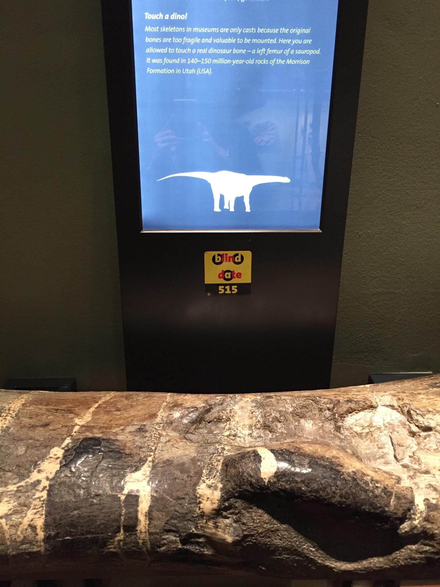 Bot dinosaurus in natuurhistorisch museum wenen