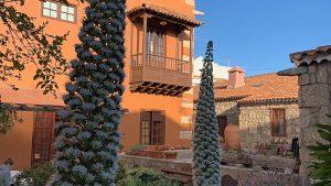 De tuin van hotel Rural in San Miguel op Tenerife