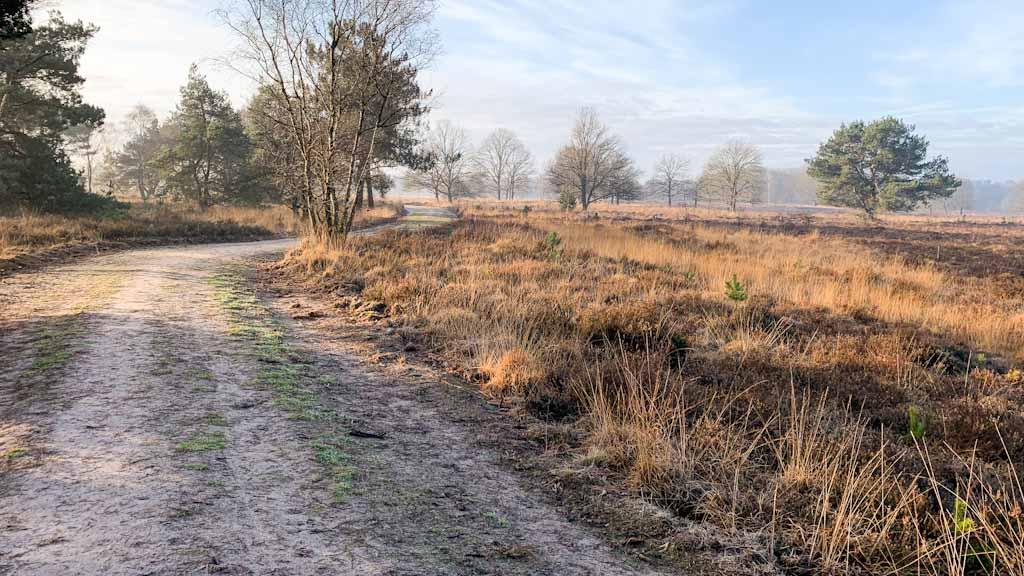 Wandelen op de Landschotse Heide